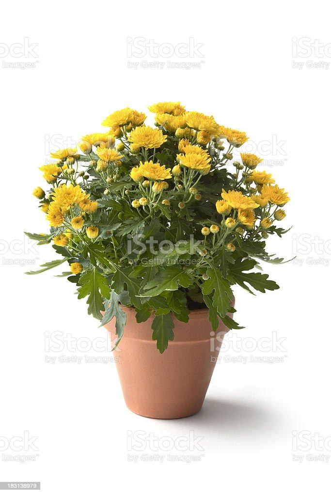 Gardening: Flowers stock photo