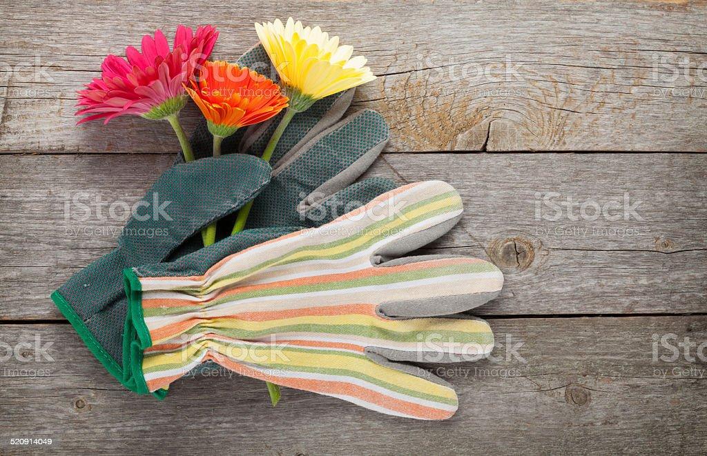 Gardening gloves and gerbera flowers stock photo