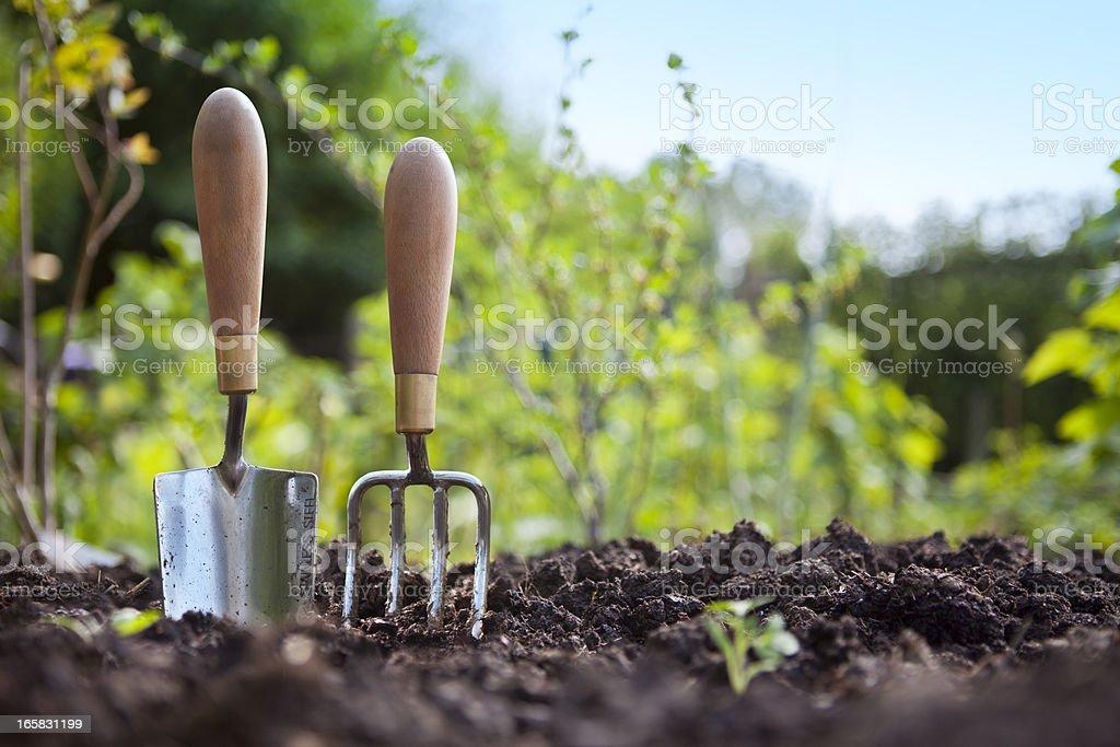 gardening hand trowel and fork standing in garden soil stock photo