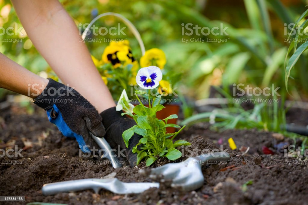Gardening Hands royalty-free stock photo