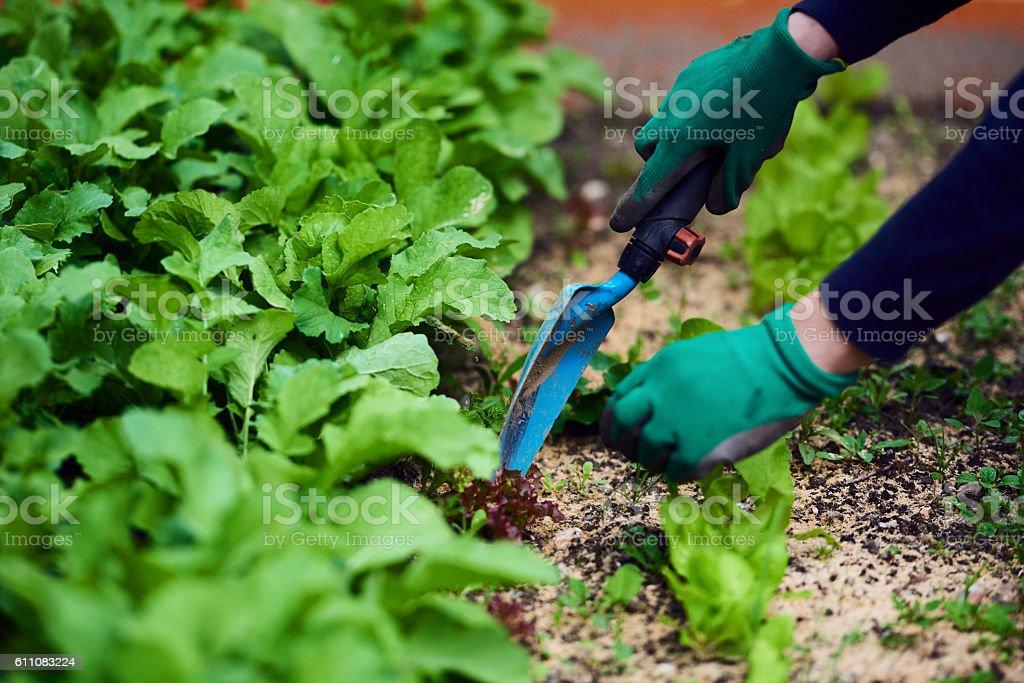 gardening in spring day stock photo