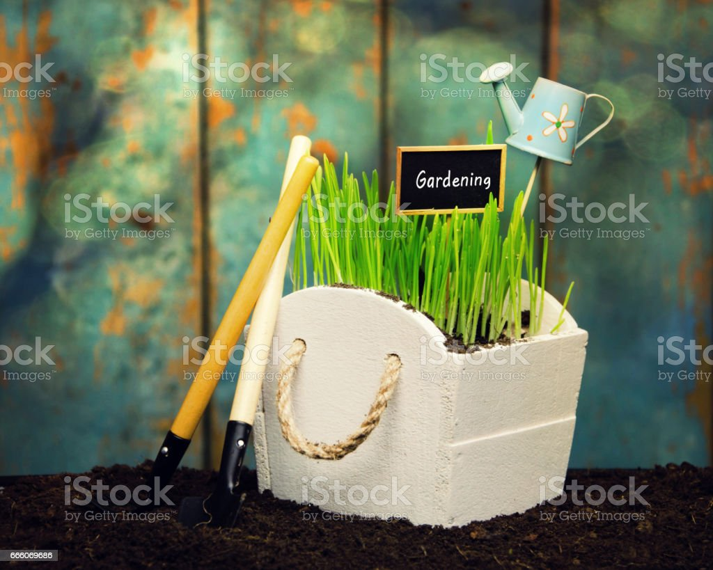 Gardening in the springtime, young plant,garden tools.Spring in the garden concept background. stock photo