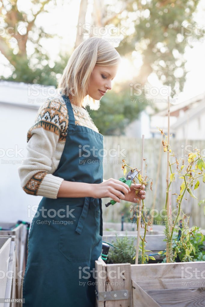 Gardening is more than a hobby... stock photo