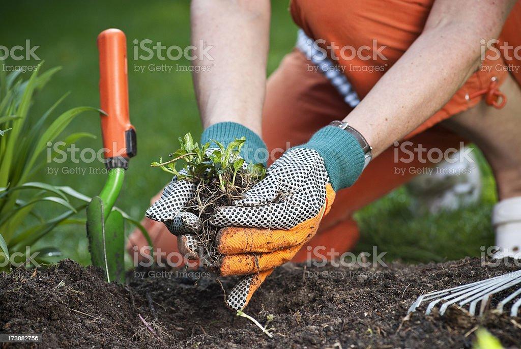 Gardening royalty-free stock photo
