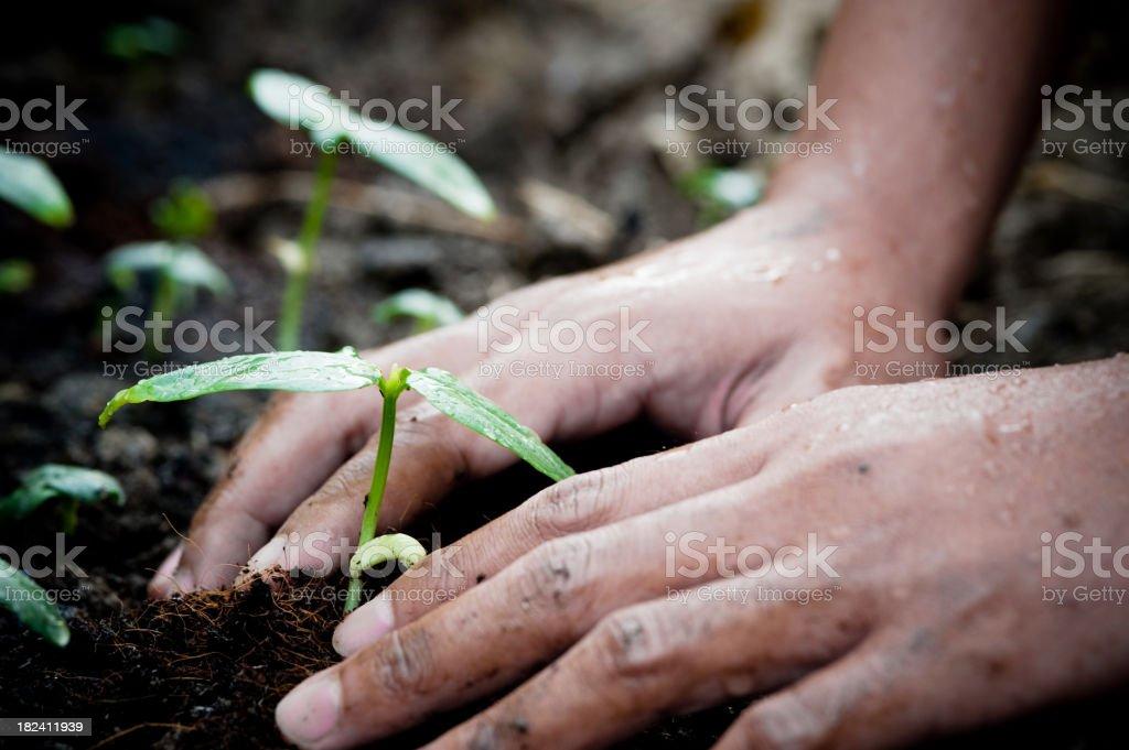 Gardening. royalty-free stock photo