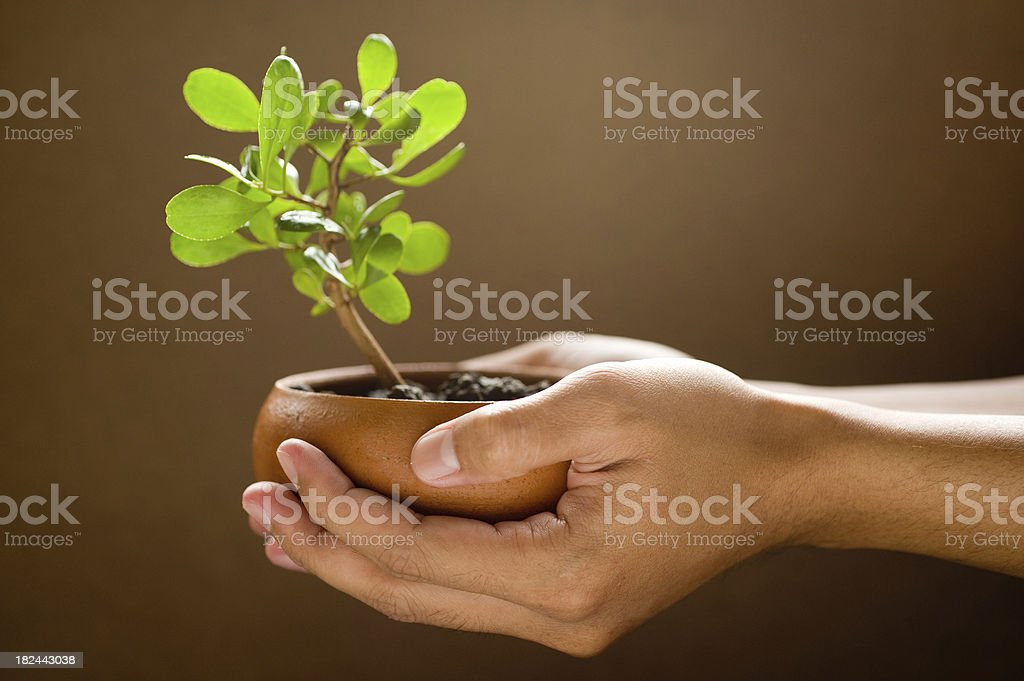 Gardening. royalty-free stock photo