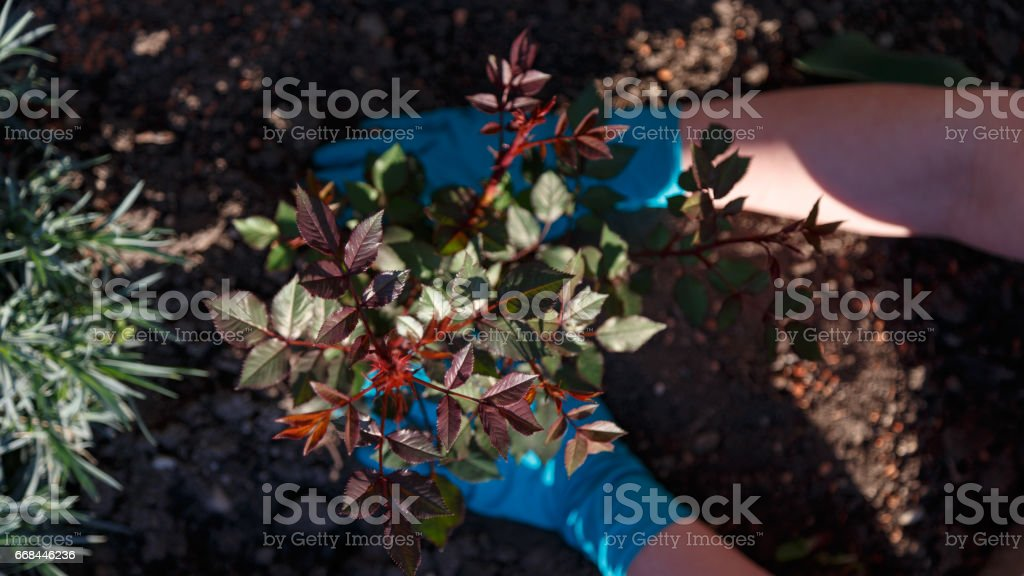 Gartenarbeit stock photo