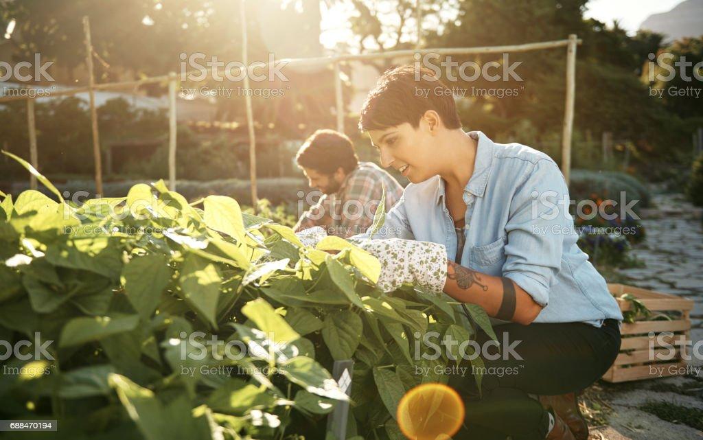 Gardening requires gentle care stock photo