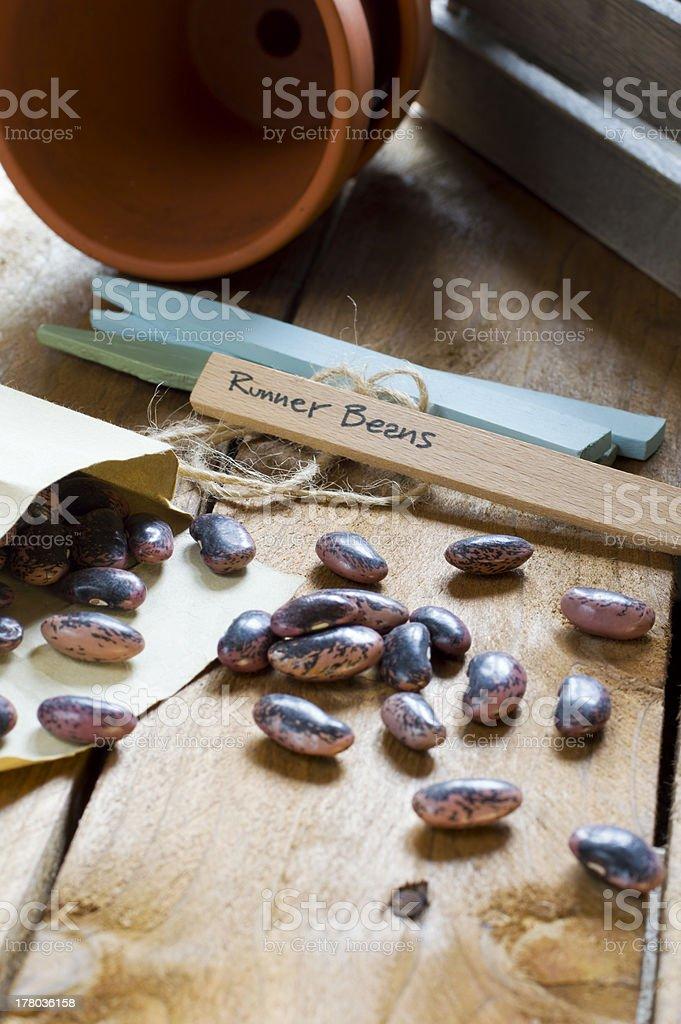 Gardening - Runner Bean Seeds stock photo