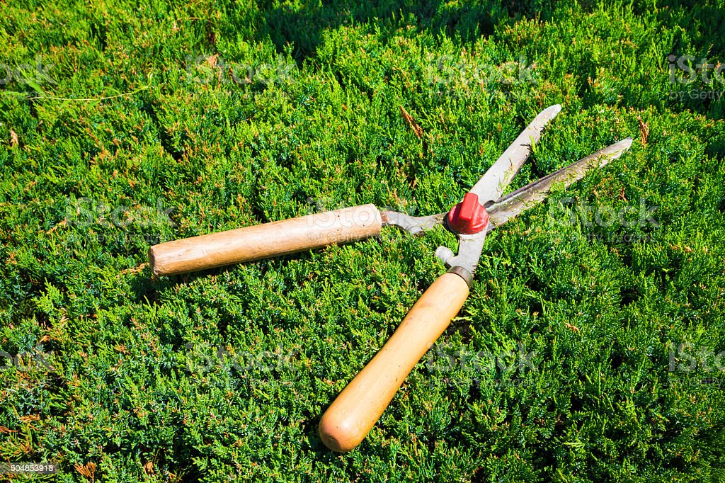 Gardening shears to trim hedges and bushes stock photo