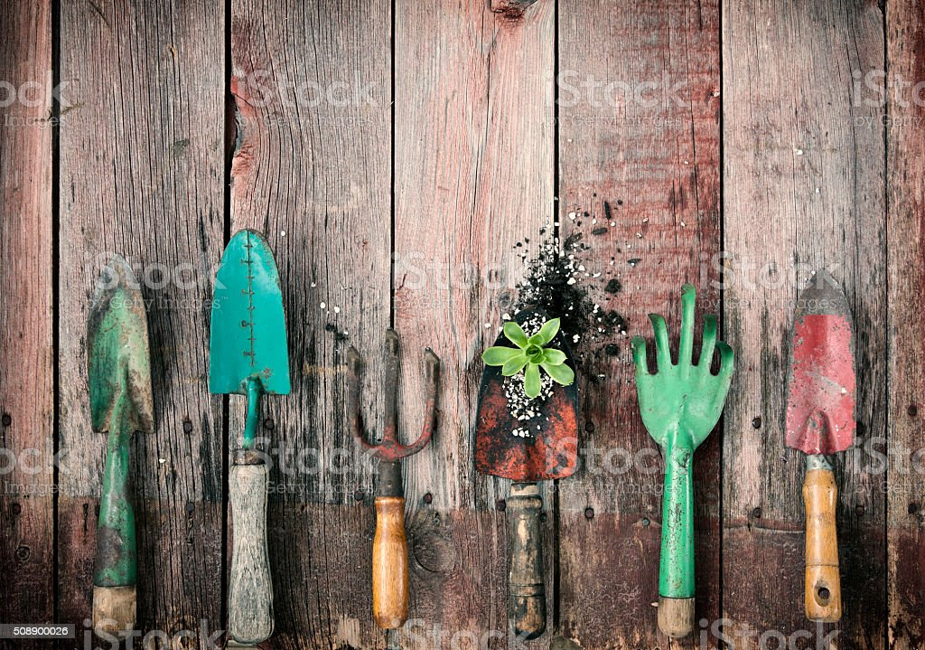 Gardening Shovels and Rakes with Dirt and a Succulent Plant stock photo