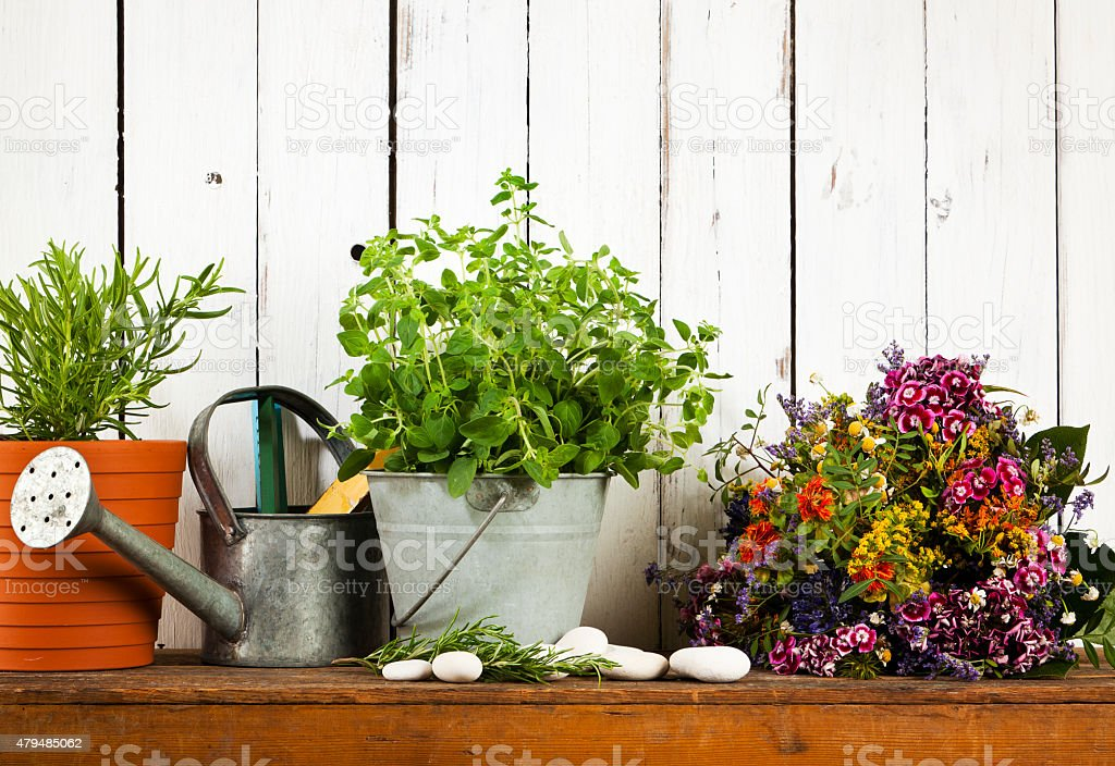 gardening still-life with potted herbs and dried flowers stock photo