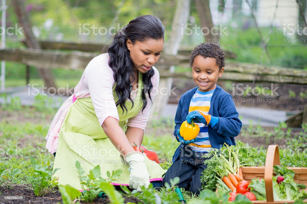 Gardening Together on Mother's Day stock photo