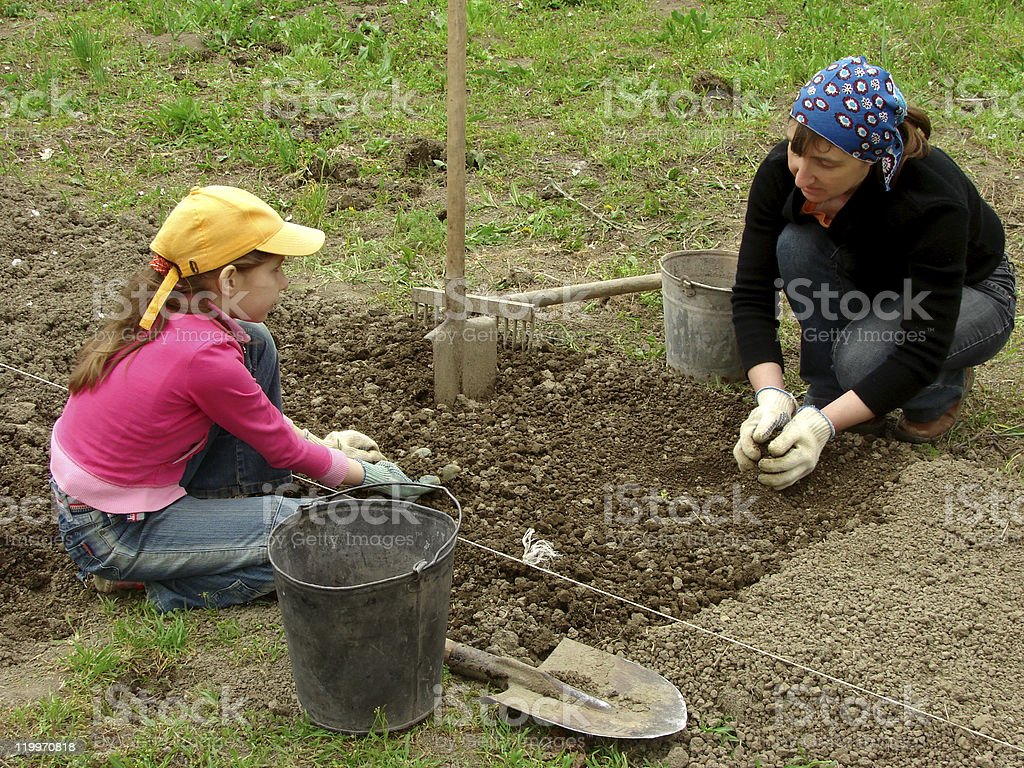 gardening together royalty-free stock photo