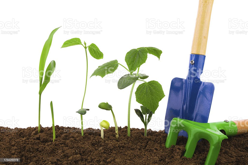 Gardening tool and Plant variety isolated on white background stock photo