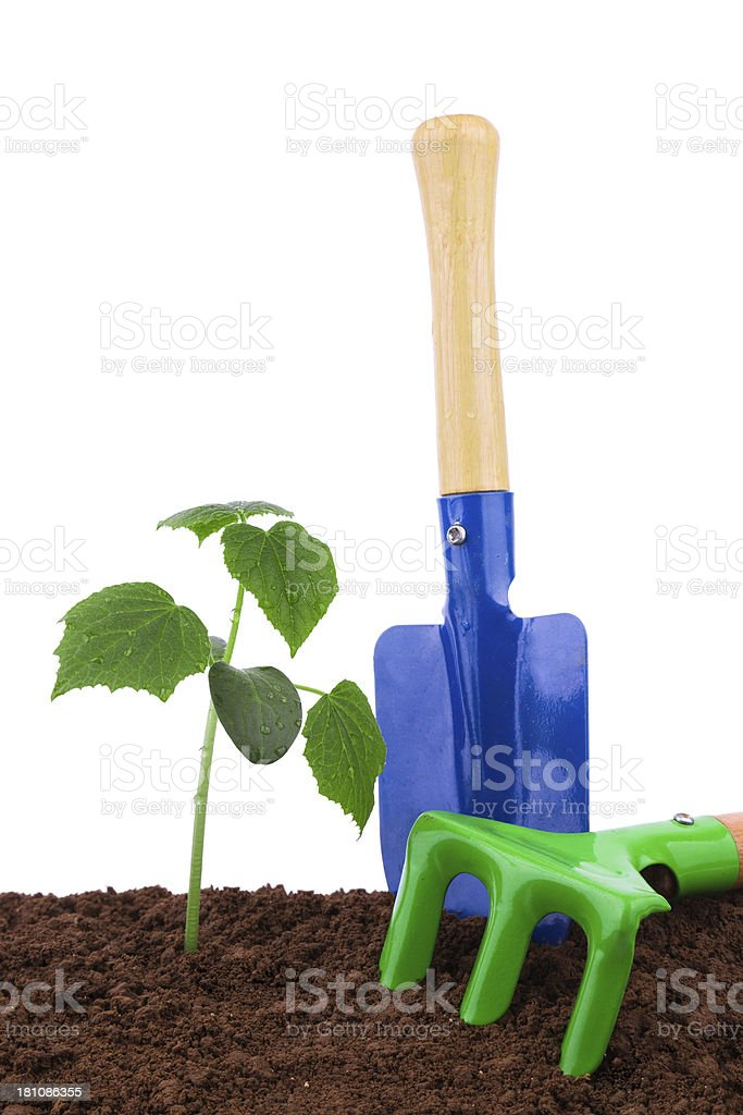 gardening tool and small plant isolated on white background stock photo