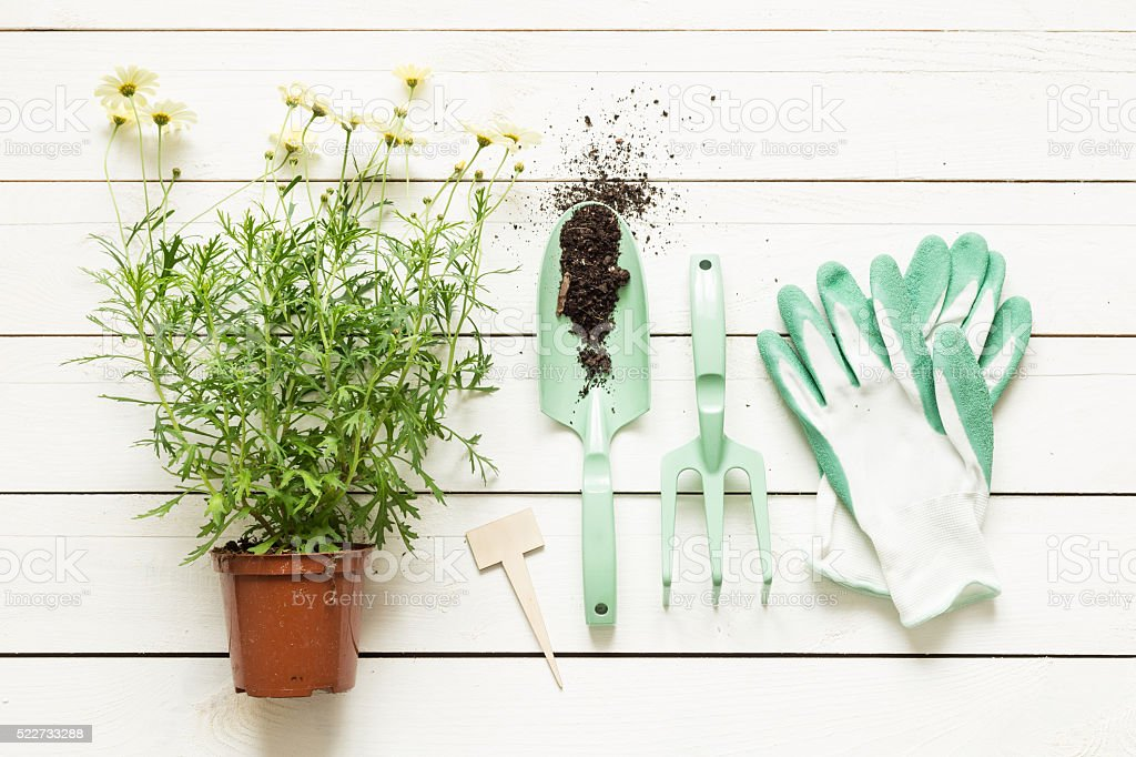 Gardening tools and flower in pot on white wood stock photo