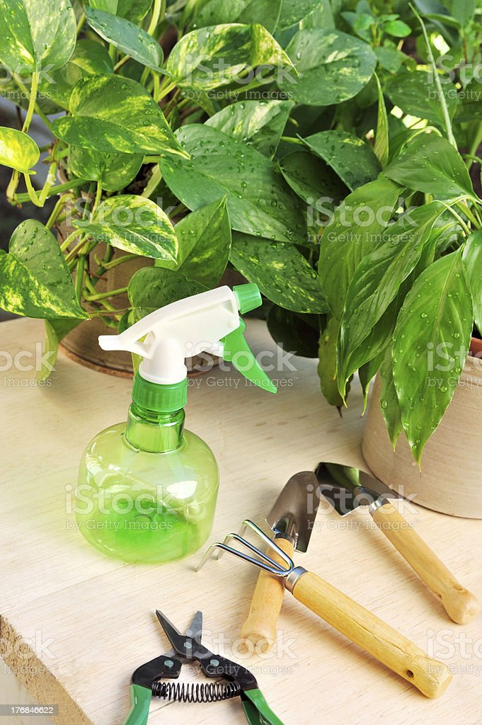 Gardening tools and houseplants - still life royalty-free stock photo