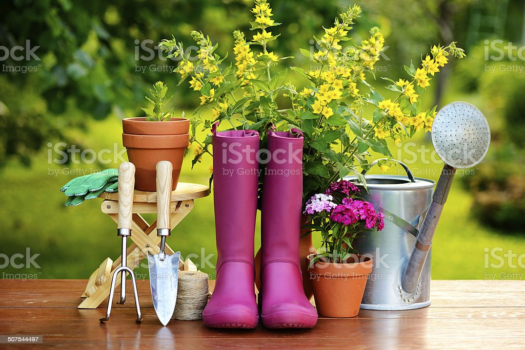 Gardening tools on wooden table and green background stock photo
