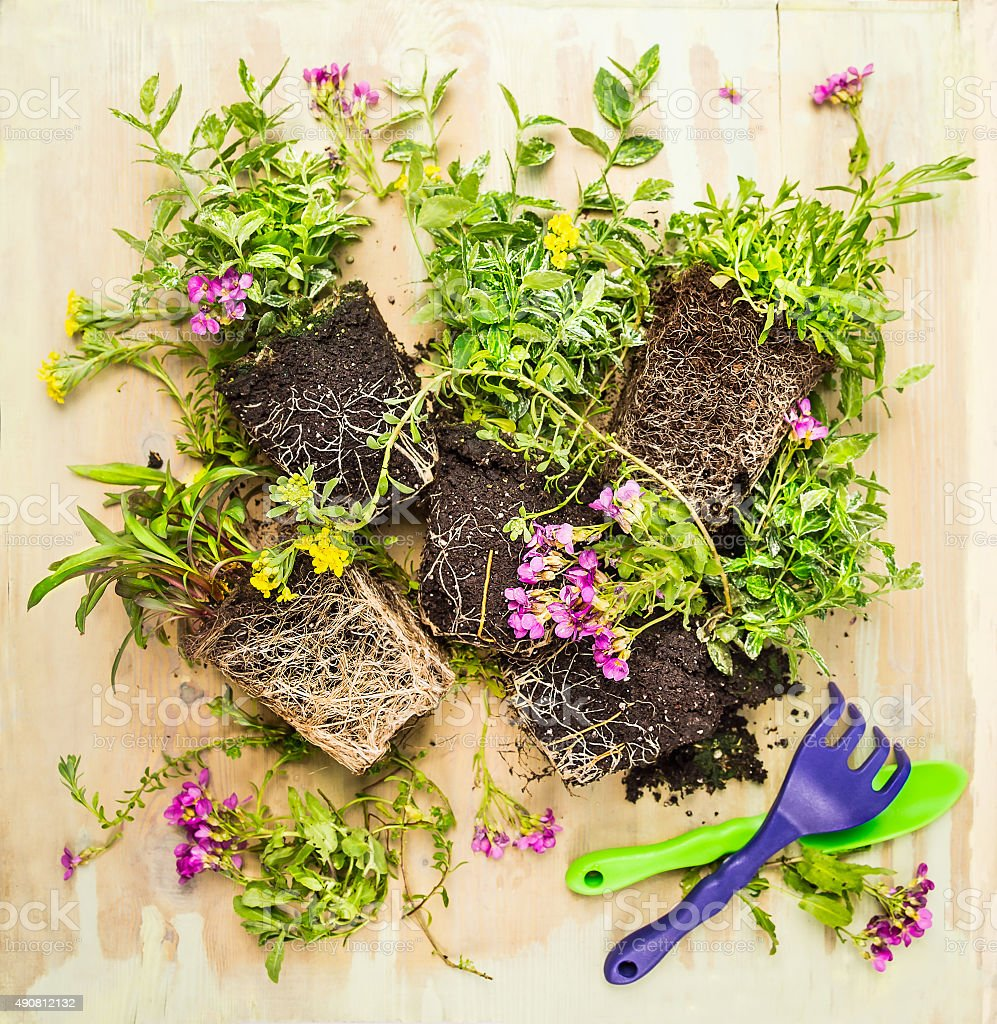 Gardening tools: scoop and rake with ground cover plant stock photo