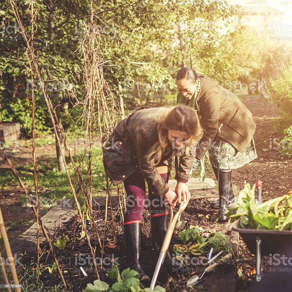 gardening volunteer woman royalty-free stock photo
