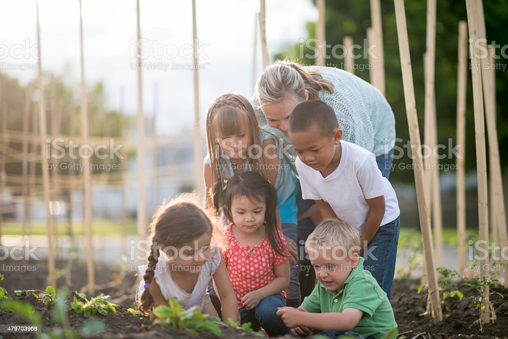 Gardening with Friends and Family stock photo