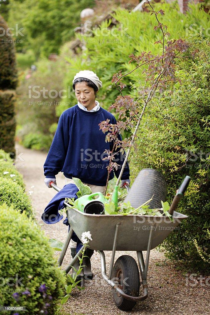 Gardening with wheelbarrow royalty-free stock photo