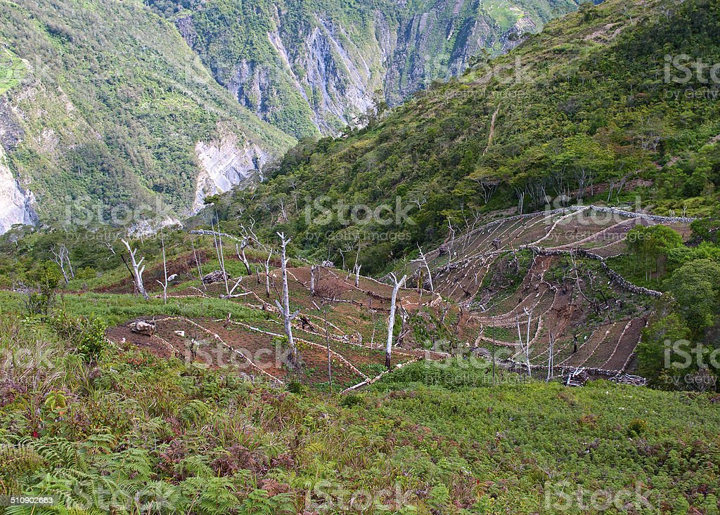 Gardens in the mountains, New Guinea stock photo