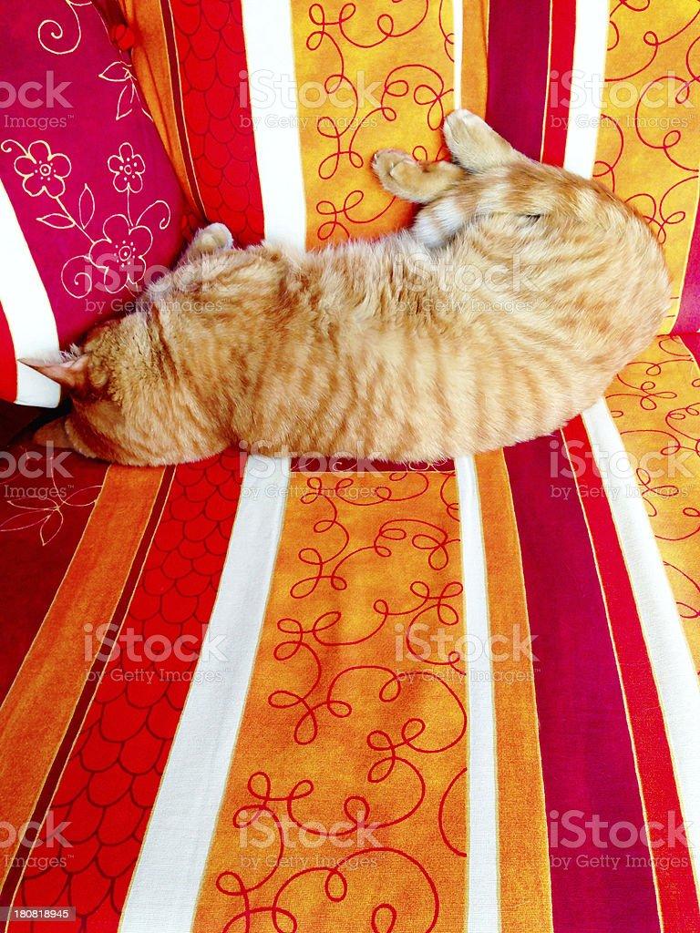 Garfield Cat on Summer Sofa royalty-free stock photo