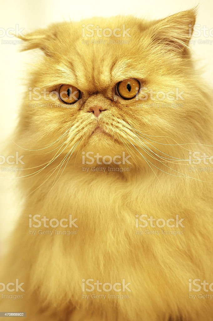 Garfield stock photo