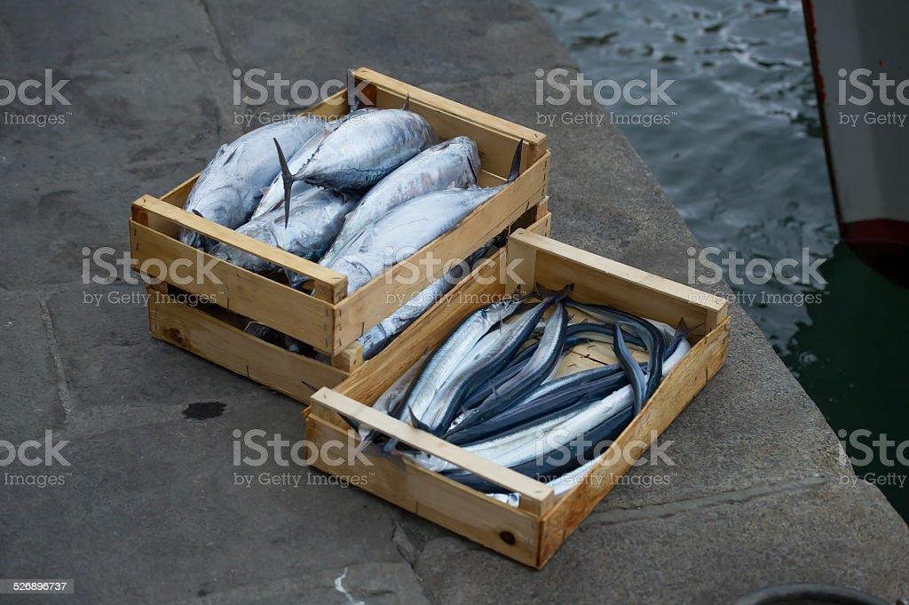 garfish and skipjack royalty-free stock photo