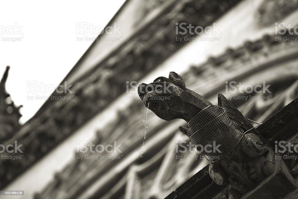 Gargoyle at Leon Cathedral stock photo