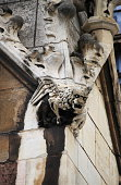 Gargoyle in Westminster Palace