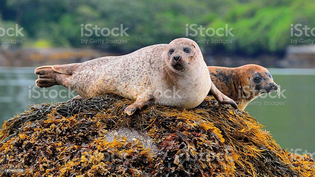 Garinish Island stock photo