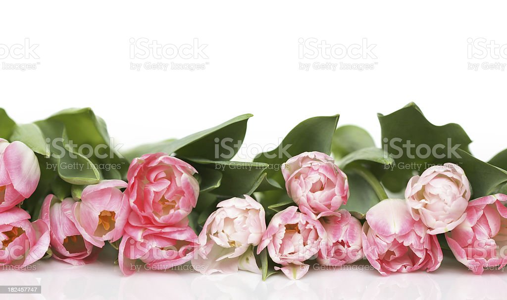 Garland of pink tulips royalty-free stock photo