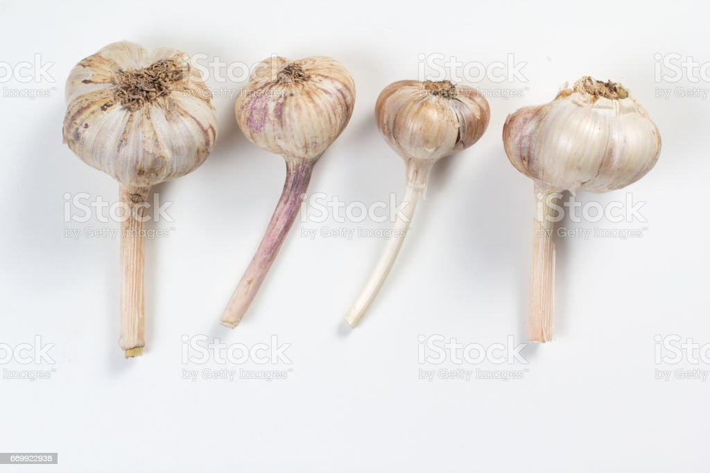 Garlic bulb isolated stock photo