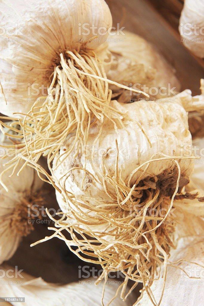 Garlic Bulb Roots Spice Seasoning stock photo