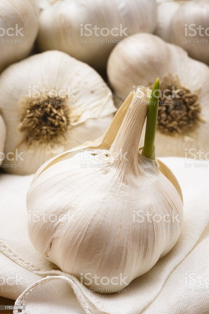 Garlic Bulb Sprout on Napkin Vertical royalty-free stock photo