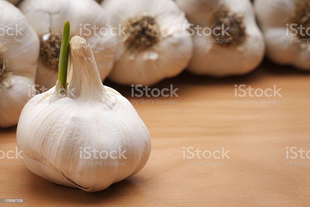 Garlic Bulb Sprout on Wood Horizontal stock photo