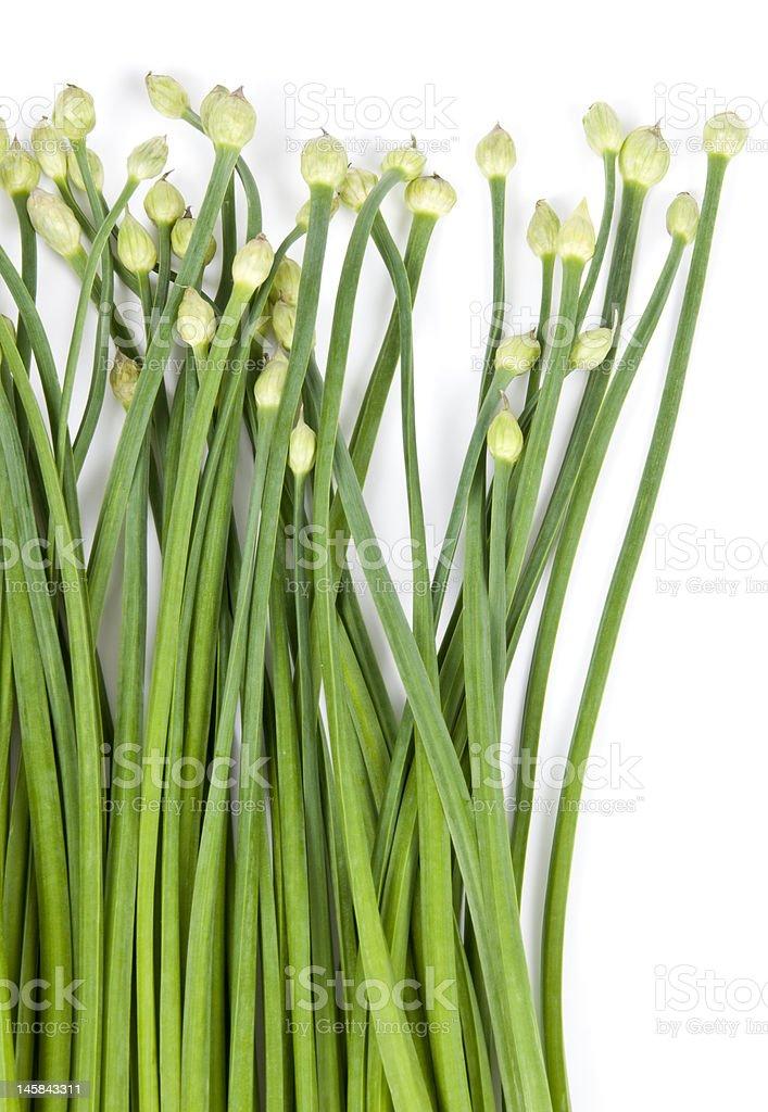 Garlic Chives royalty-free stock photo