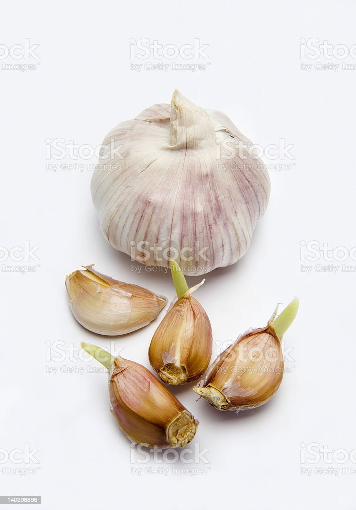 Garlic herb bulb stock photo