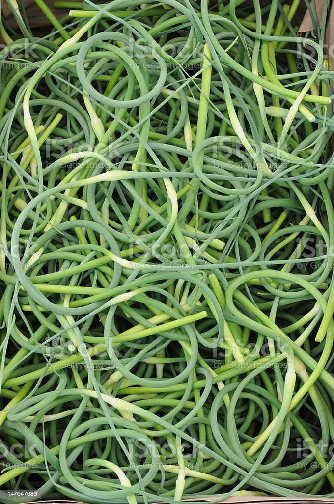 Garlic Scapes stock photo
