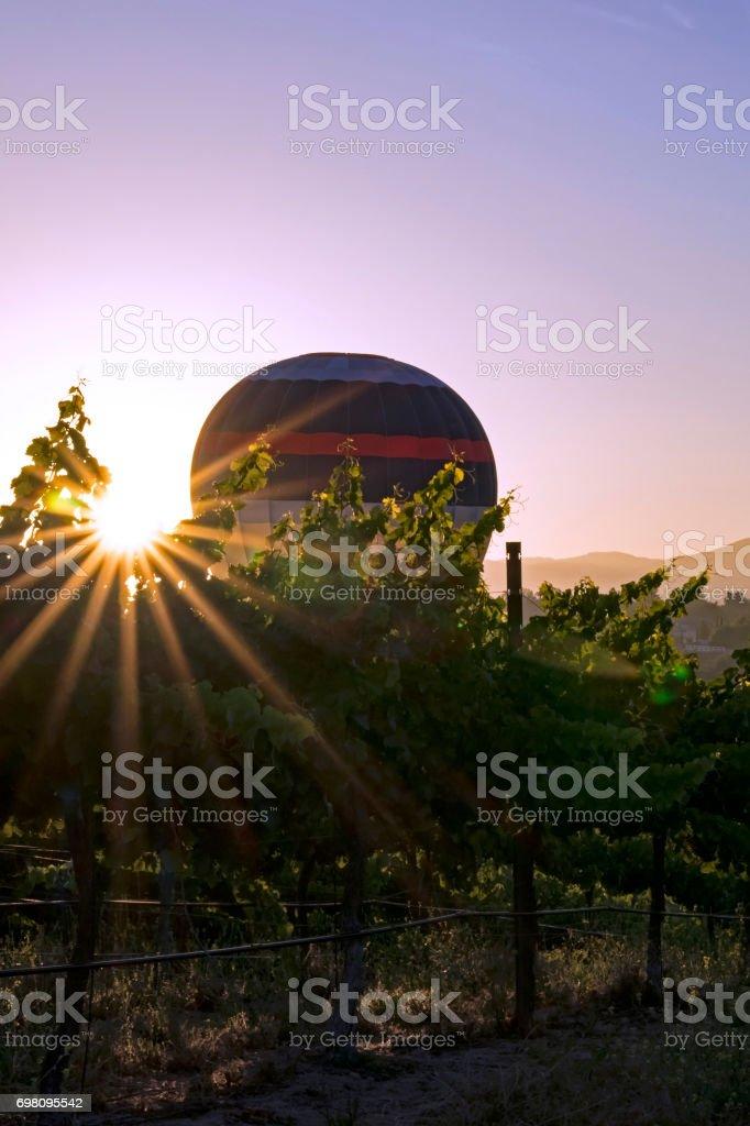Garpe vineyard with hot air balloon stock photo