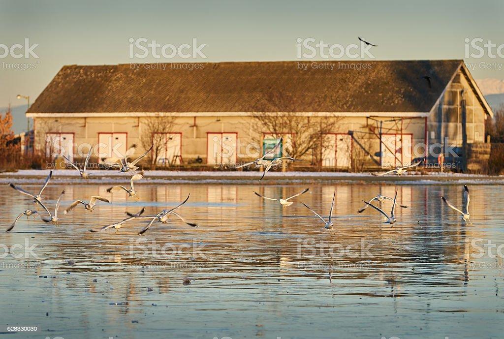 Garry Point Seagulls, Steveston stock photo