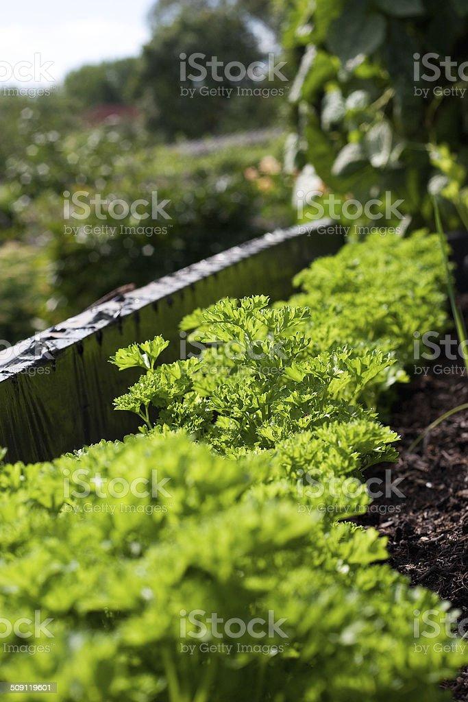 Garten stock photo
