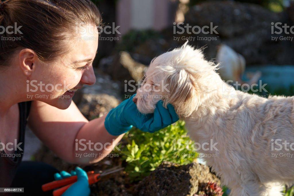 Gartenarbeit mit dem Hund stock photo
