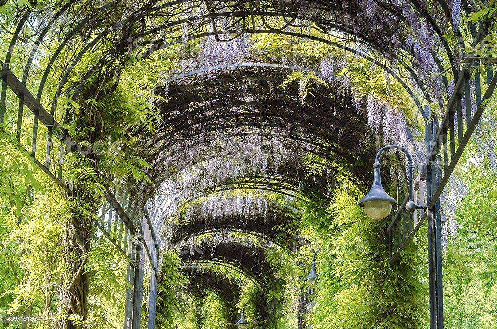 Garten-Tunnel stock photo