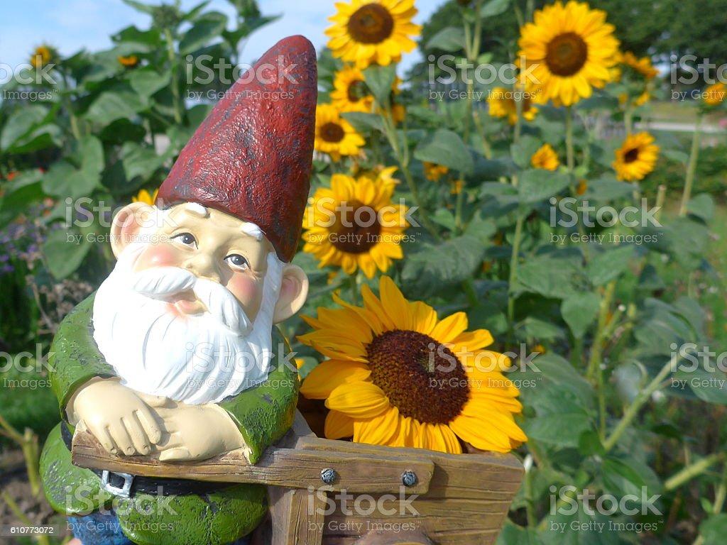 Gartenzwerg mit Schubkarre und Sonnenblumen stock photo