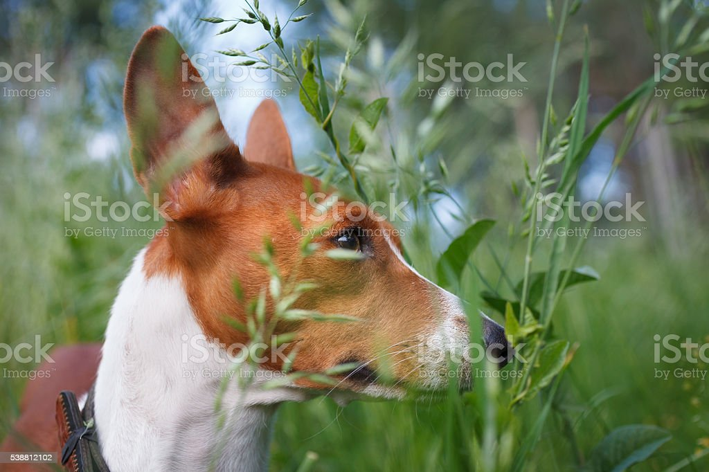 Gary in the grass stock photo