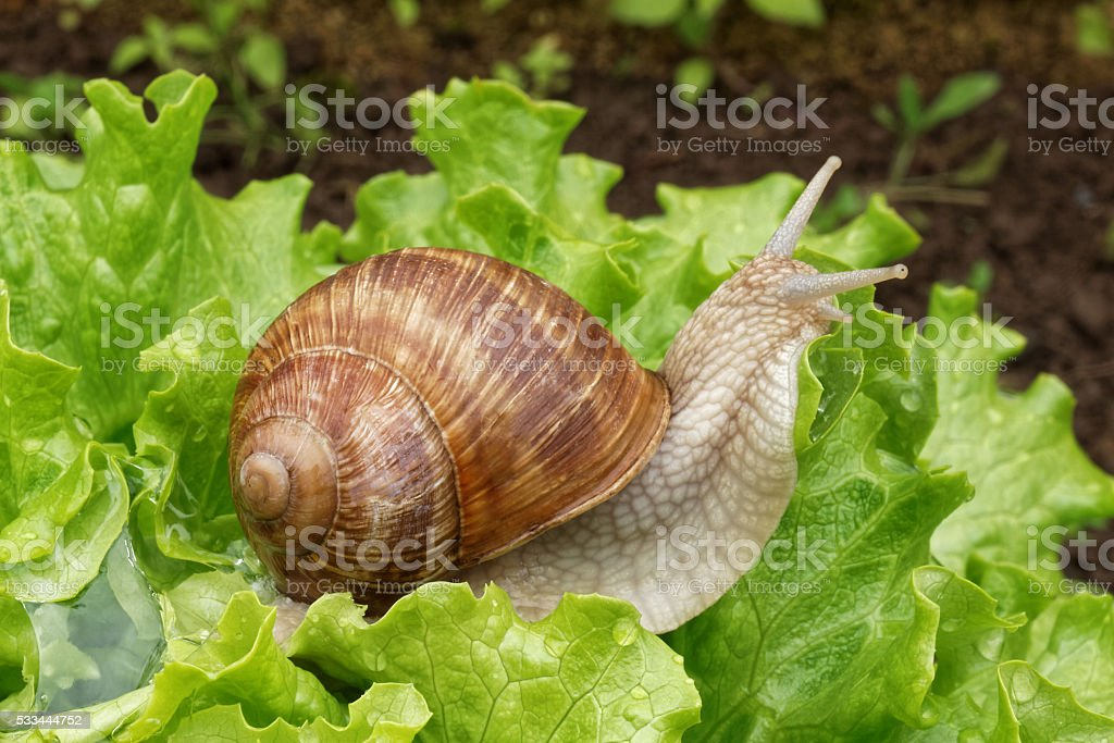gastropod stock photo